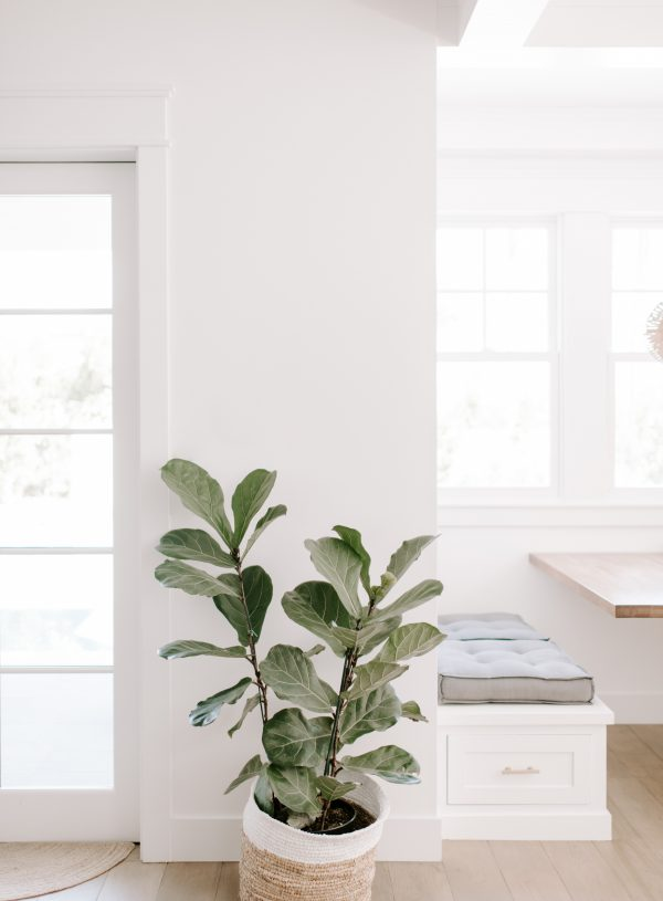 plant 600x815 - Blog